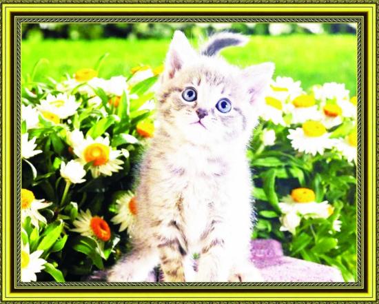 Алмазная мозаика 40x50 Маленький котёнок на фоне ромашек